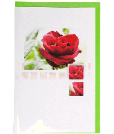 Kaart (164R) Rode Roos