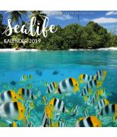 Kalender 2019: Sealife