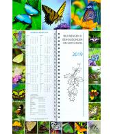 Omlegweek 2019 Lovely Butterflies (13)