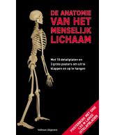 De anatomie van het menselijk lichaam