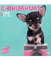 Kalender 2019 Chihuahuas studio pets