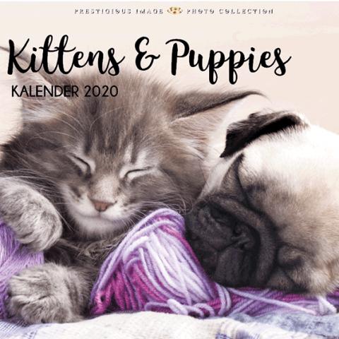 Kalender 2020: Kittens & puppies